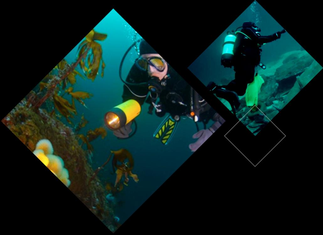 Bilde av dykking